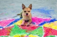Junger Hund während des nepalesischen Religionsfestivals Lizenzfreie Stockfotos