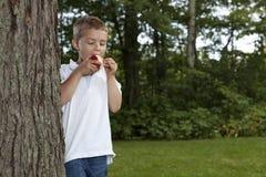 Junger Junge, der einen Apfel isst Stockfotografie