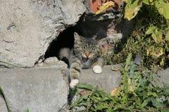 Junger Katzenschlaf in der Sonne Lizenzfreie Stockbilder