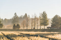Junger Kiefersämling im Licht des Gartens morgens Stockbild