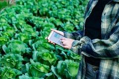 Junger Landwirt, das Gemüse einiger Diagramme beobachtend archiviert im Handy, organischer intelligenter Bauernhof 4 Eco 0 Techno stockfoto