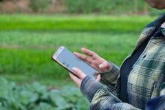 Junger Landwirt, das Gemüse einiger Diagramme beobachtend archiviert im Handy, organischer intelligenter Bauernhof 4 Eco 0 Techno stockfotografie