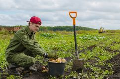 Junger Landwirt, der Kartoffeln erntet Stockfotos
