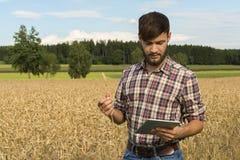 Junger Landwirt mit der Tablette, die Ernte kontrolliert lizenzfreie stockfotografie