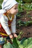 Junger LKW-Landwirt Lizenzfreie Stockbilder