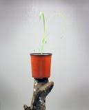 Junger Loquat-Baum Stockfotos