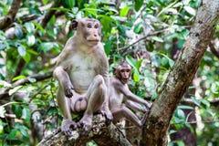 Junger männlicher Affe und Familie, die auf der Niederlassung sitzt Lizenzfreies Stockbild