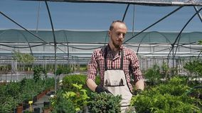 Junger männlicher Gärtner des Nahaufnahmeporträts im Gewächshaus, Sorgfaltseltene pflanzen unter Verwendung der Handnaturgewächsh stock footage