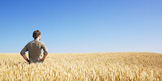 Junger Mann auf dem Weizengebiet Stockfotos