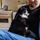 Junger Mann, der eine Katze anhält Stockfotos