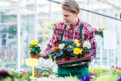Junger Mann, der einen Behälter mit eingemachten Blumen beim Arbeiten als Florist hält Lizenzfreie Stockfotografie