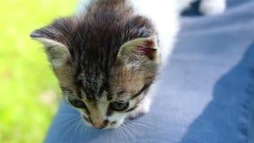 Junger Mann hält ein kleines Kätzchen in seinen Händen stock footage