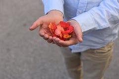 Junger Mann ` s bewaffnet im blauen Hemd, das rosafarbene Blumenblätter hält Stockbild