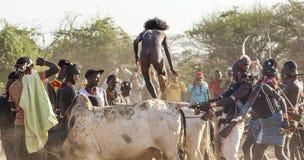Junger Mann springt von den Stieren Turmi, Omo-Tal, Äthiopien Stockbild
