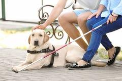 Junger Mann und blinde Frau mit Blindenhundsitzen Stockfotos