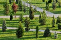 Junger Park Stockbilder
