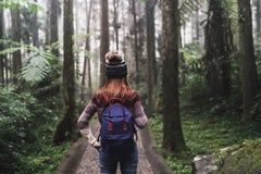 Junger Reisender, der in den Wald geht stockfotografie