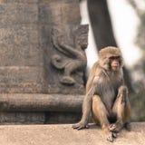 Junger Rhesusfaktormakakenaffe an Swayambhunath-Tempel, Kathmandu V Lizenzfreies Stockfoto