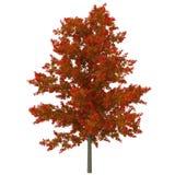 Junger roter Eichen-Herbst auf Weiß Abbildung 3D Lizenzfreie Stockfotos