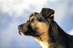 Junger schwarzer Hund im Schnee Stockbild