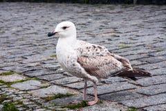 Junger Seevogel Lizenzfreie Stockbilder