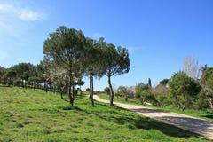 Junger Stadtpark Ist ein grünes Feld voll der Weizenanlagen Lizenzfreies Stockfoto