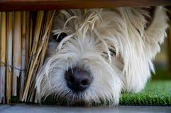 Junger Terrier unter Bannister Stockfotos