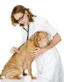 Junger Tierarzt, der die Herzfrequenz eines erwachsenen sharpei Hundes überprüft. Stockfotografie