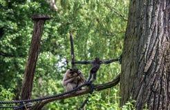 Junger und alter Affe Stockbilder