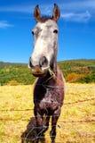 Junger und lustiger Esel Lizenzfreie Stockfotos