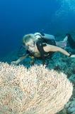Junger Unterwasseratemgerättaucher Stockbilder