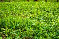 Junger Wald des Grases im Frühjahr Stockfoto