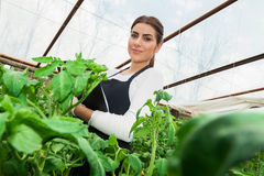 Junger weiblicher Landwirtschaftsingenieur, der Anlagen kontrolliert Stockbilder