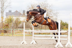 Junger weiblicher Reiter auf Braune springen über Hürde stockbild