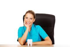 Junger weiblicher Zahnarzt, der Zahnmodell hält und hinter dem Schreibtisch sitzt stockfotografie