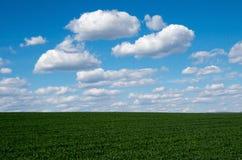 Junger Weizen Lizenzfreie Stockfotografie