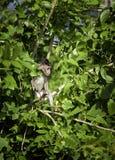 Junger wilder Affe auf dem Baum Lizenzfreies Stockbild