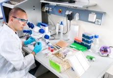 Junger Wissenschaftler arbeitet im Labor Stockfoto
