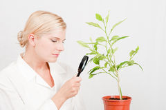 Junger Wissenschaftler botanisch mit grünem Baum stockfoto