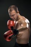 Junges Boxerverpacken lizenzfreies stockfoto