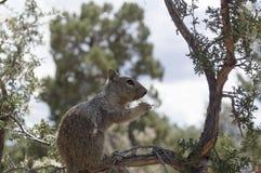Junges Eichhörnchen, das auf einer Niederlassung sitzt und Blumenblumenblätter isst und Stockfoto