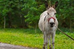 Junges Eselporträt an einem sonnigen Tag Stockfotografie