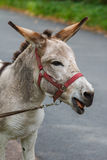 Junges Eselporträt an einem sonnigen Tag Stockbild