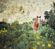 Junges Fohlen auf einem blühenden Gebiet stockbilder