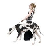 Junges gehendes Mädchen sein Hund (großer Däne 4 Jahre) ha Lizenzfreie Stockfotos