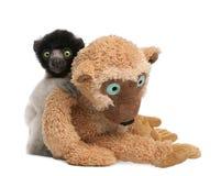 Junges gekröntes Sifaka mit seinem Teddybären - Propit Stockbild