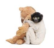 Junges gekröntes Sifaka mit seinem Teddybären - Propit Lizenzfreie Stockbilder