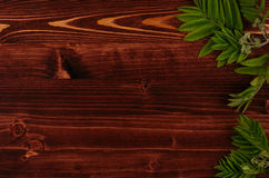 Junges Grün des Sommers verlässt auf Hintergrund des hölzernen Brettes des Weinlesebrauns Dekorativer Rahmen mit Kopienraum, Drau Stockfotos