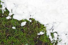 Junges grünes Gras und der Reinweißschnee Stockfoto