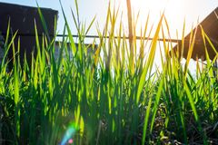 Junges gr?nes Gras Sun-Tag Wecken der Natur lizenzfreie stockfotografie